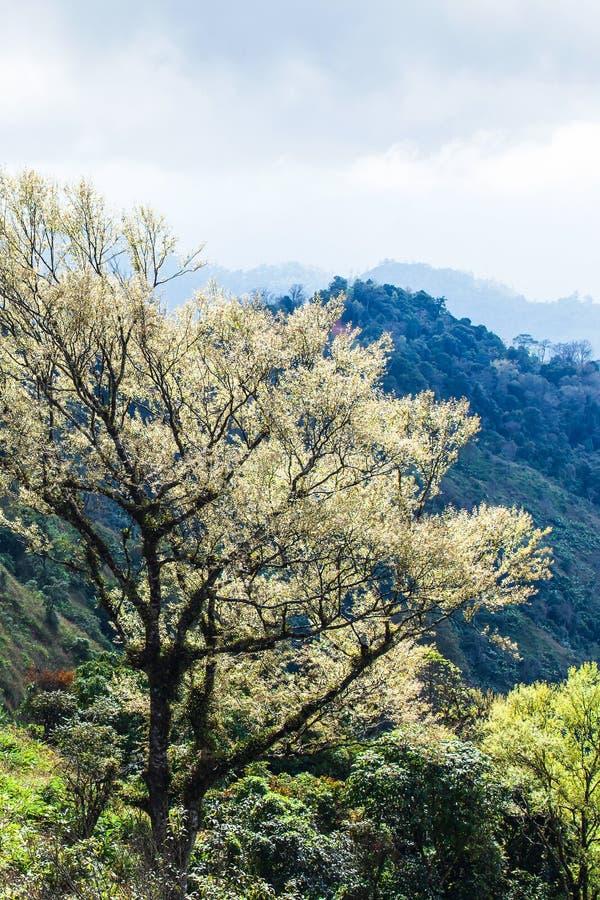 Art des branches des arbres tropicaux dans le printemps, rayon de soleil lumineux brillant sur de jeunes feuilles argent?es Jeune images libres de droits
