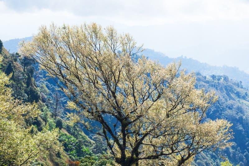 Art des branches des arbres tropicaux dans le printemps, rayon de soleil lumineux brillant sur de jeunes feuilles argent?es Jeune image libre de droits