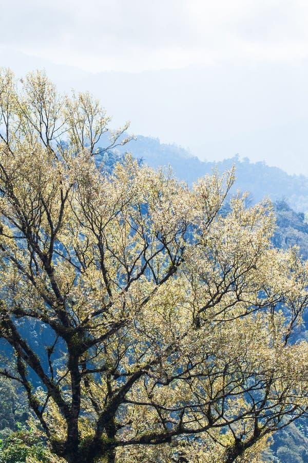 Art des branches des arbres tropicaux dans le printemps, rayon de soleil lumineux brillant sur de jeunes feuilles argent?es Jeune photos libres de droits