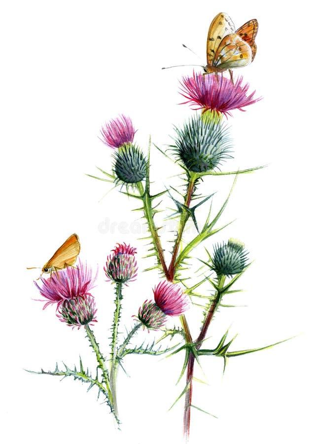 Art för tistel två, med fjärilar Den botaniska vattenfärgen skissar på en vit bakgrund royaltyfri illustrationer