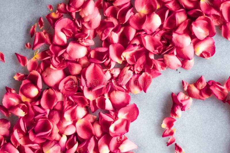 Rose petals on marble stone, floral background royalty free stock photos
