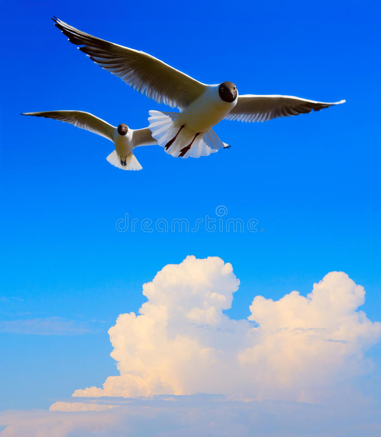 Art flying bird in blue sky background stock photography