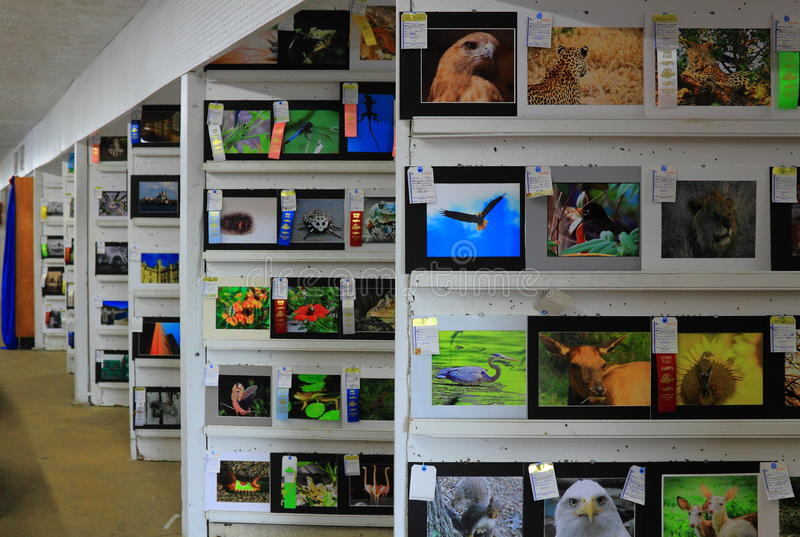 Art Gallery Display fotografia de stock