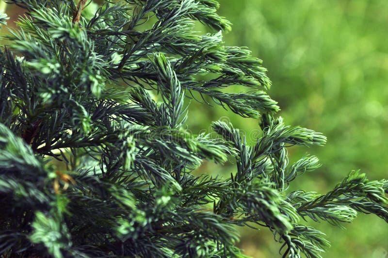 Art green stock image