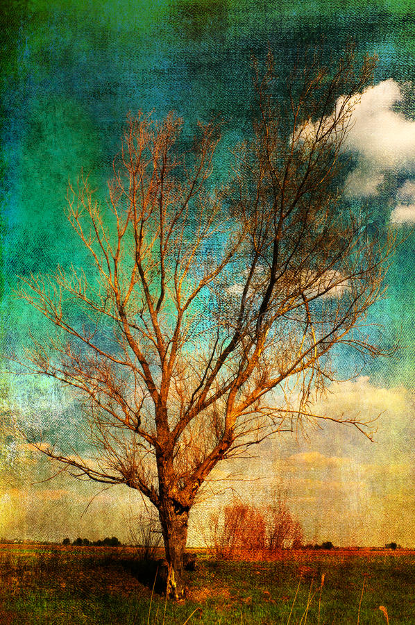 Free Art Grunge Landscape - Lonely Tree On The Meadow Stock Photo - 21468790
