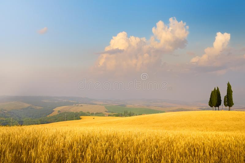 Art Italian summer countryside landscape – golden fields and blue sky stock photo