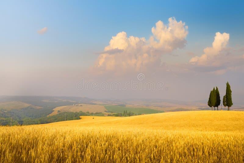 Art Italian summer countryside landscape – golden fields and blue sky. Italian summer countryside landscape – golden fields and blue sky stock photo