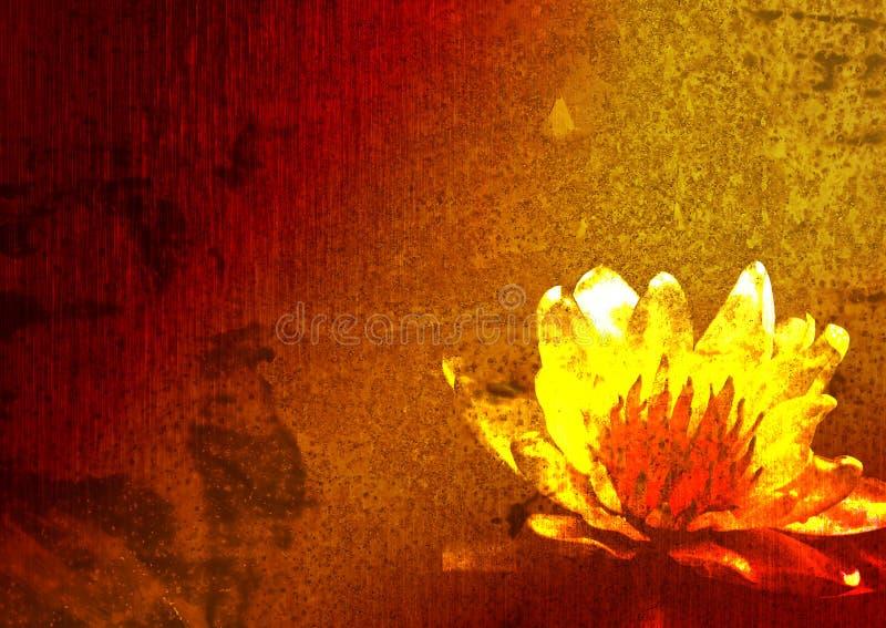 Art. Lírio vermelho em uma lagoa. fotos de stock