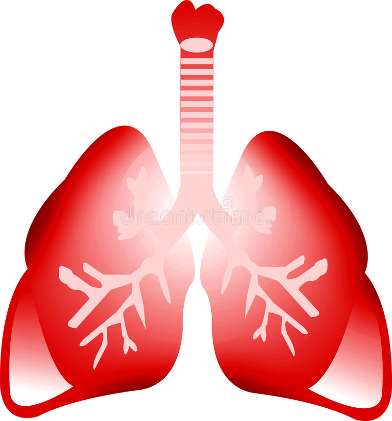 Art lung. Illustration art of a lung with isolated background stock illustration