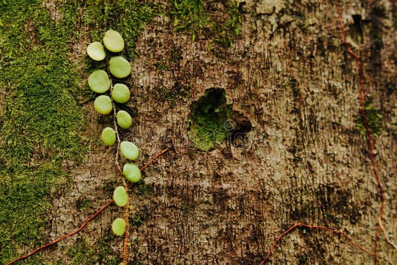 Art of Nature stock photo