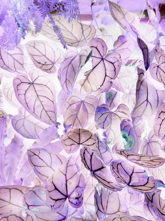 The art of negative leaves. This is another way of seeing something by invert my positive shots into negative images, thanks to photoshop stock photo
