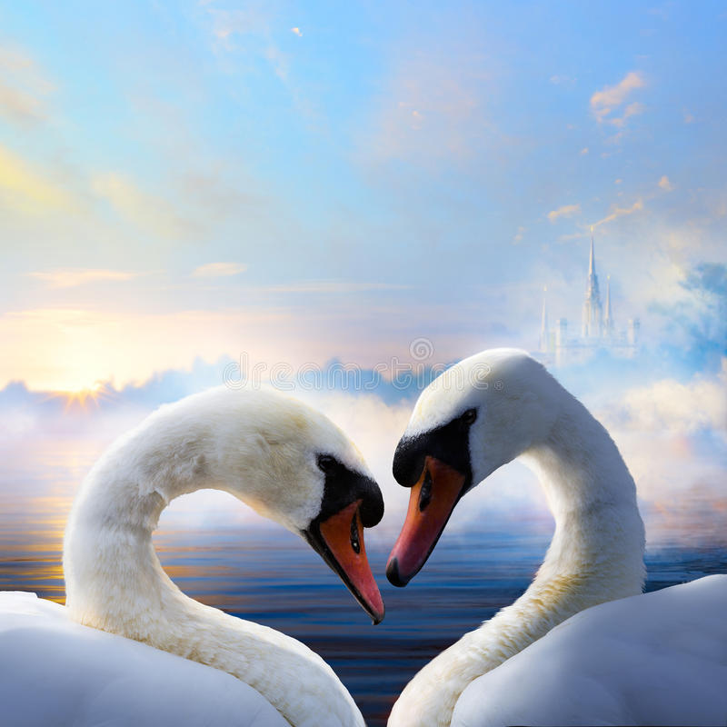 Art pair of swans in love floating on the water at sunrise of th. Pair of swans in love floating on the water at sunrise of the day stock image