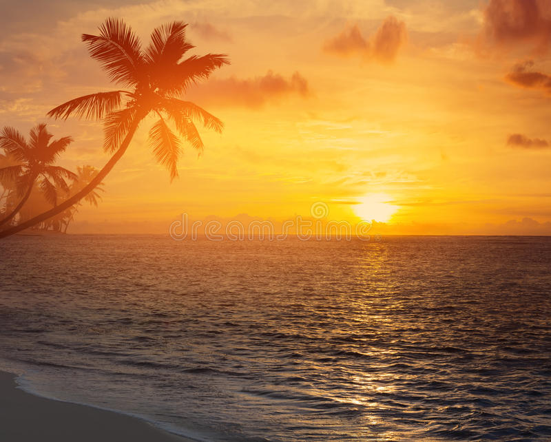 Art palm trees silhouette on sunset tropical beach stock images