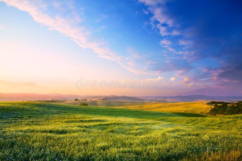 Art Panorama de una puesta del sol colorida en un prado verde floreciente foto de archivo