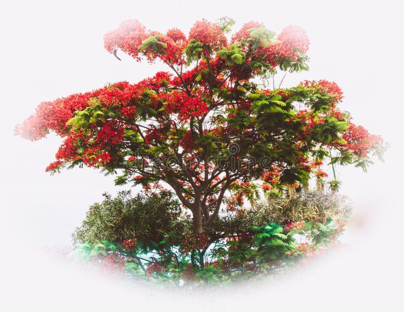 Art Photo di un albero fiammingo nell'acqua con la riflessione fotografie stock libere da diritti