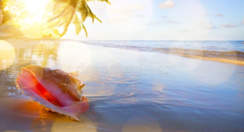 Art Shell en la playa tropical imagen de archivo