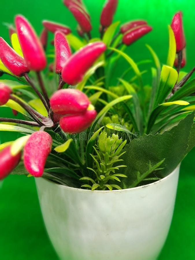An artificial plant with a green background royalty free stock photo