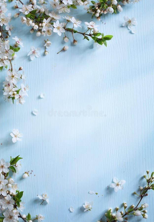 Art Spring border background royalty free stock photos