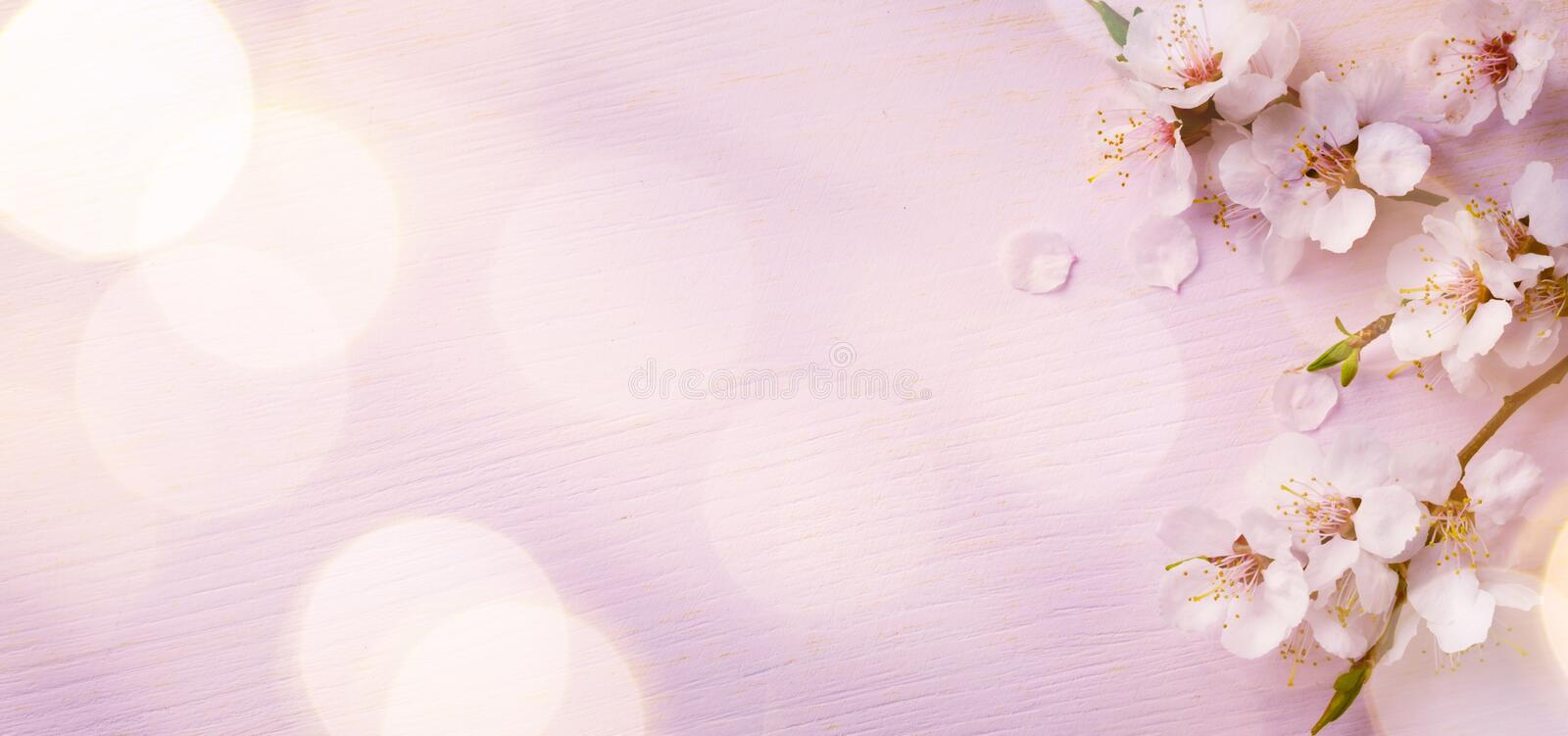 Art Spring border background with pink blossom stock images