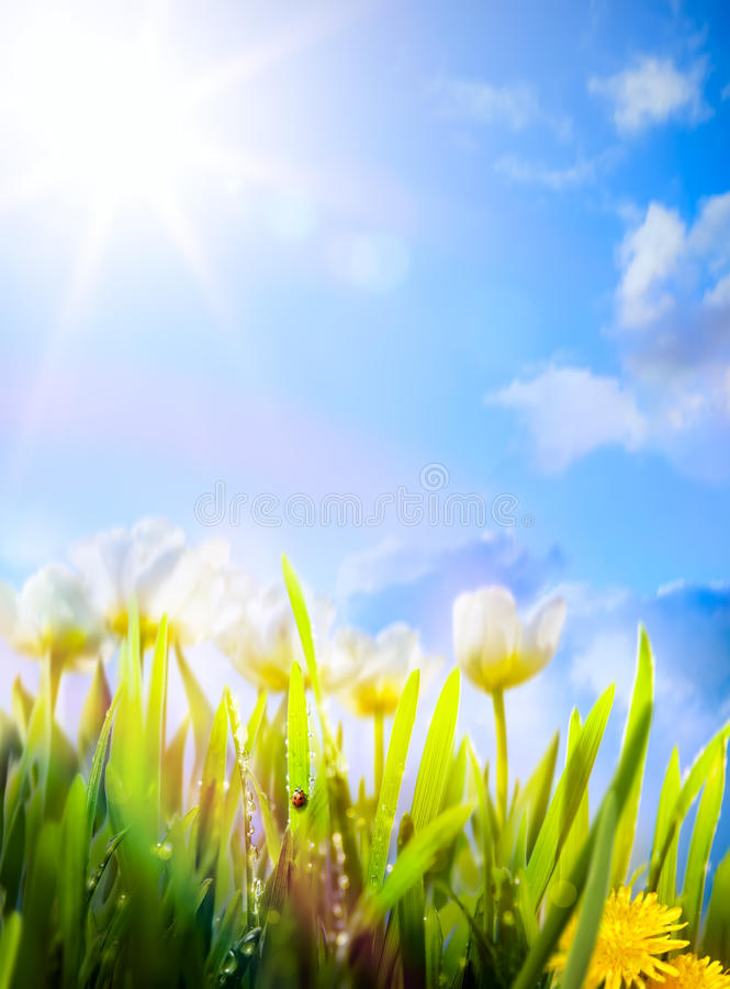 Free Art Spring Flowers Background Royalty Free Stock Photos - 50334888