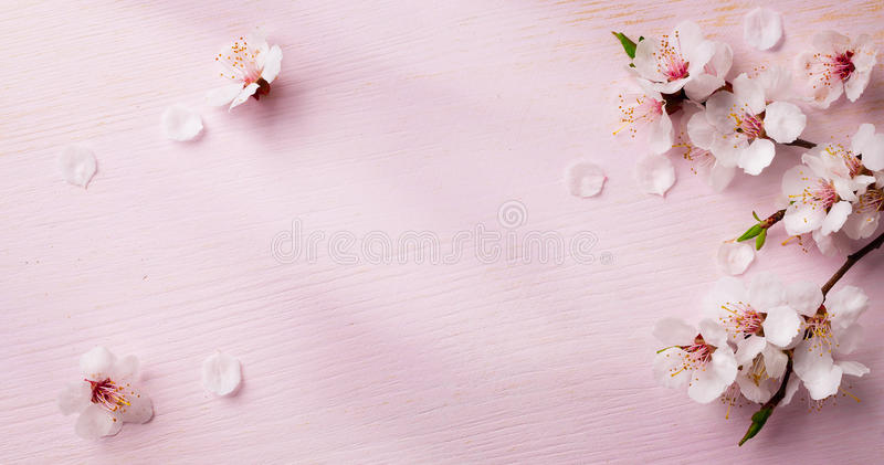 Art spring flowers background royalty free stock photos