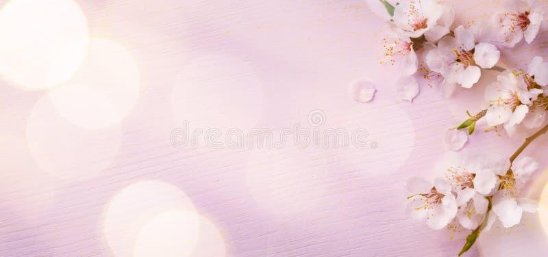 Art Spring-grensachtergrond met roze bloesem stock afbeeldingen