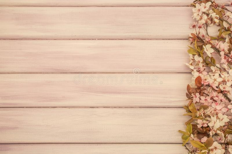 Art Spring wooden background with pink blossom royalty free stock image