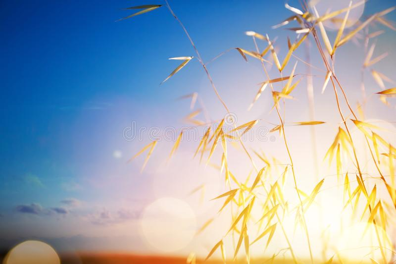 Art summer or autumn sunny nature background. Abstract summer or autumn sunny nature background royalty free stock photography