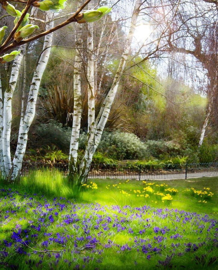 Art Sunlight en el bosque verde, tiempo de primavera fotografía de archivo