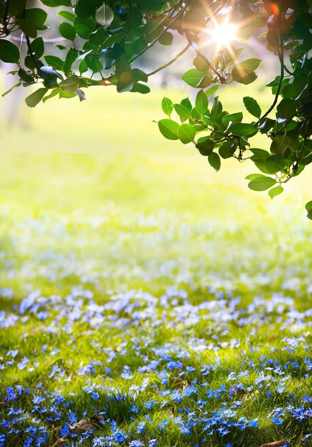 Art Sunlight nella foresta verde di pasqua, tempo di molla immagini stock libere da diritti