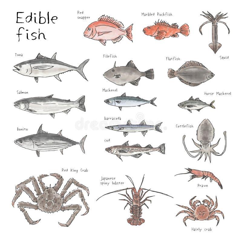 Art von essbaren Fischen, Handgezogene Skizzen-Aquarellillustration stock abbildung