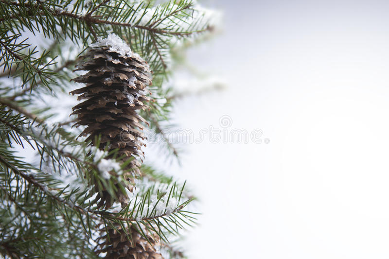 Art winter forest stock photography