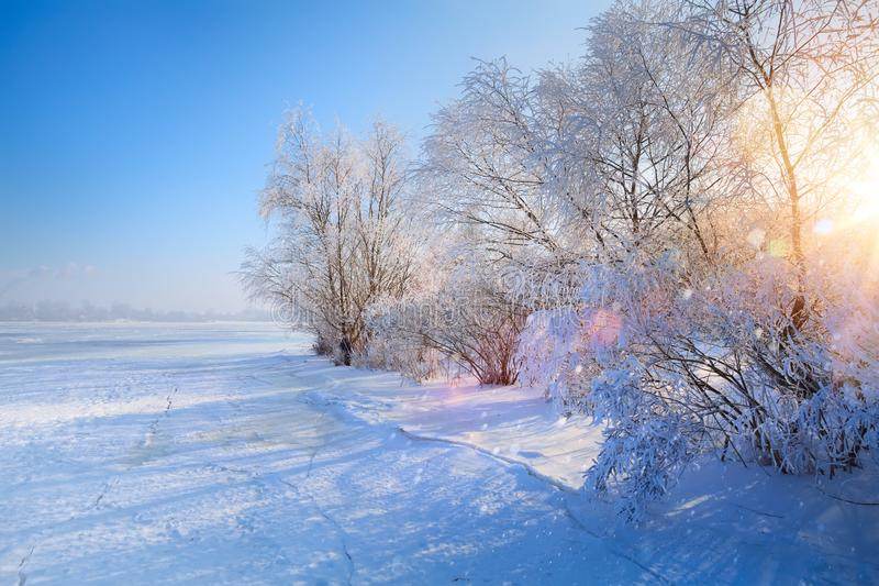 Art winter Landscape with Frozen lake and snowy trees stock photos
