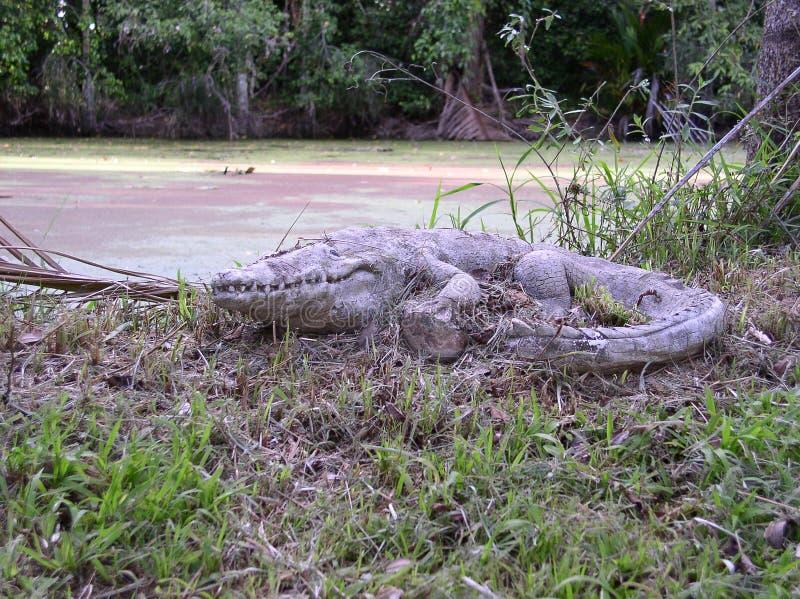 Arte australiana do jardim do crocodilo no banco de rio fotografia de stock royalty free