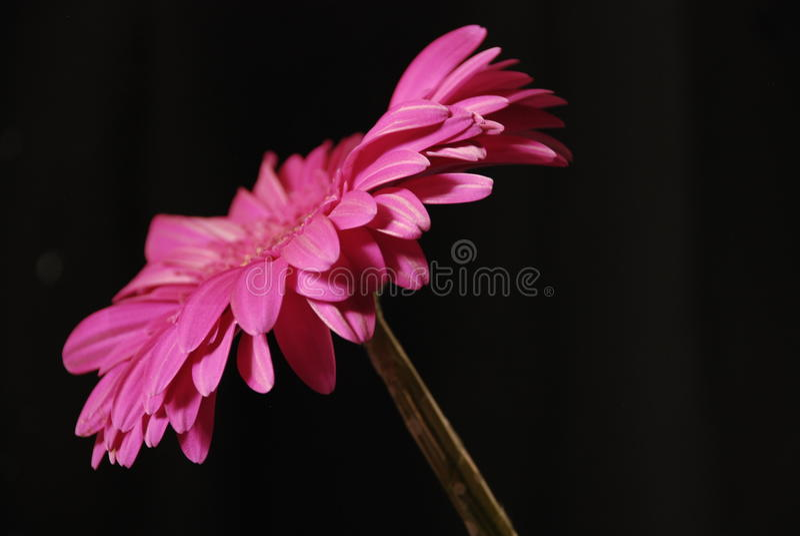 Arte bonita da beleza da cor da flor imagens de stock royalty free