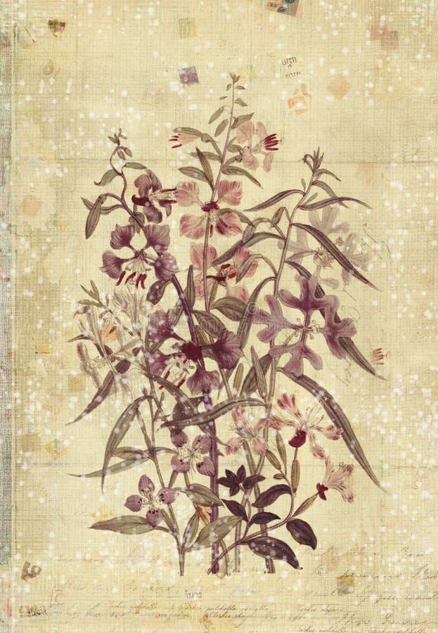 Arte Botánico De La Pared Del Estilo Del Vintage De Las Flores Con ...
