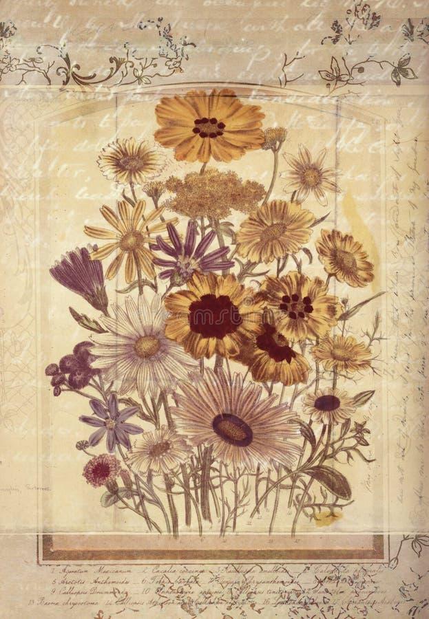 Arte botânica da parede do estilo do vintage das flores com fundo Textured ilustração do vetor