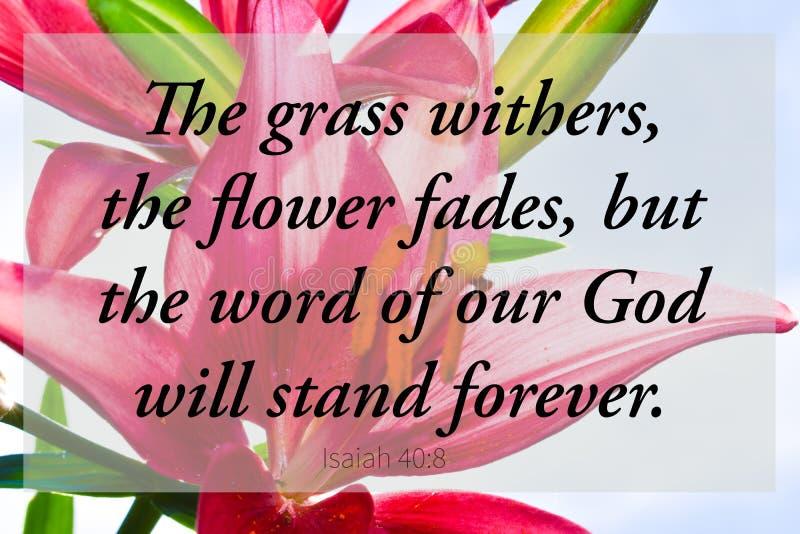 Arte cristã do scripture vermelho da Bíblia dos lillies imagem de stock royalty free