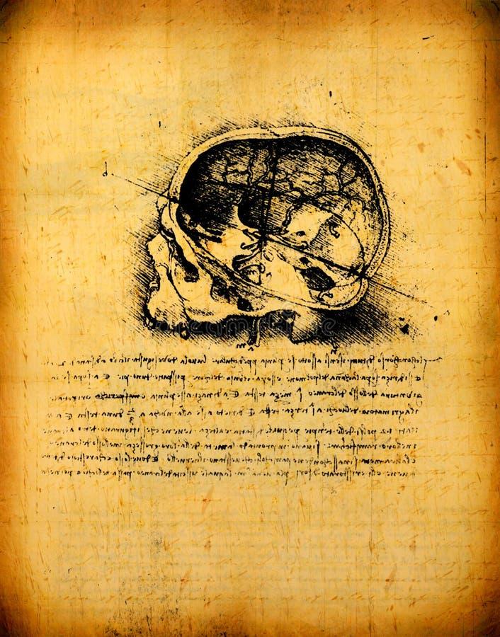 Arte da anatomia fotografia de stock royalty free