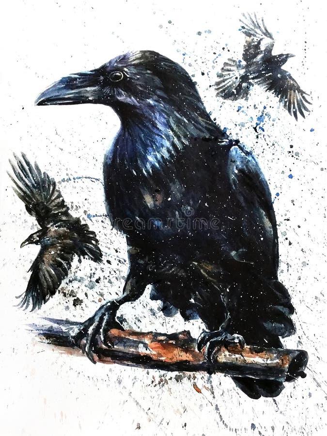 Arte de la pintura del pájaro del negro de la acuarela del cuervo stock de ilustración