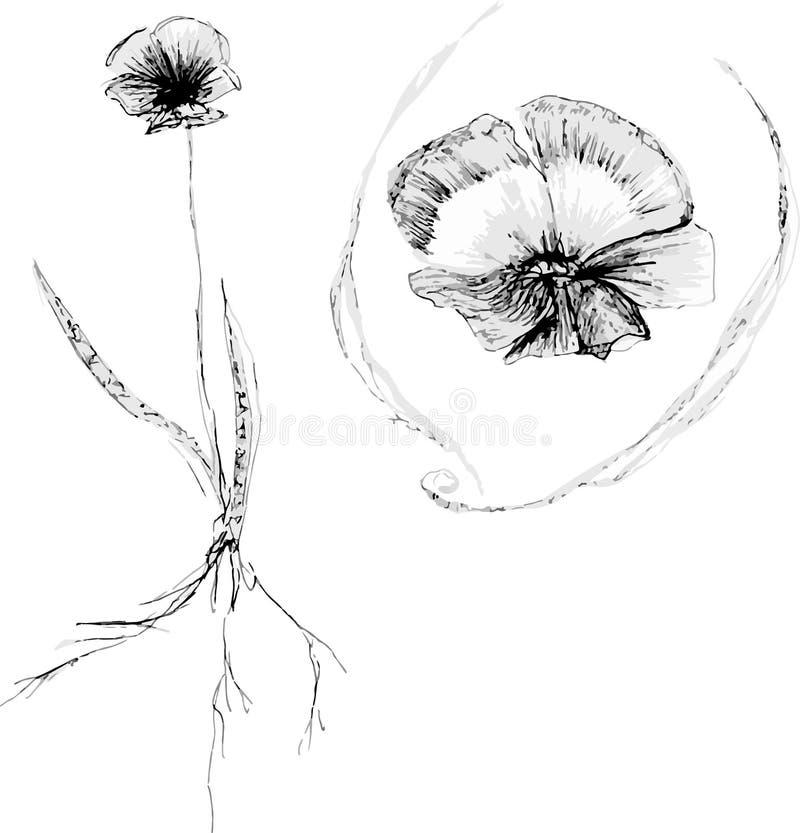 Arte del bosquejo de la amapola foto de archivo libre de regalías