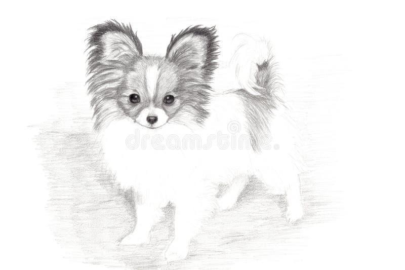 Arte desenhada do filhote de cachorro de Papillon mão adorável ilustração do vetor