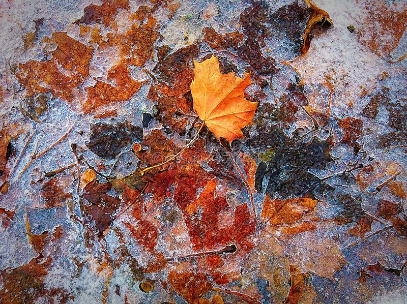 A arte do outono imagens de stock