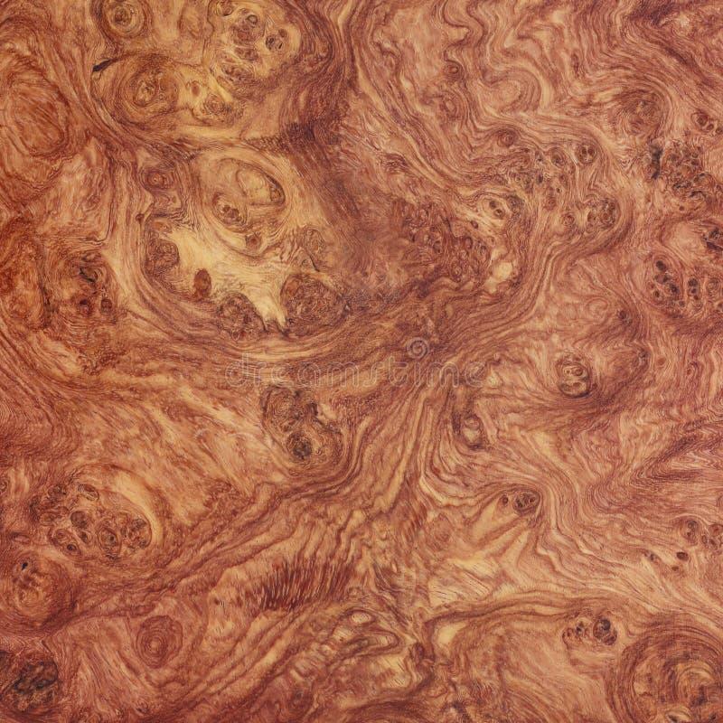 Arte exótica do fundo do burl de madeira de Afzelia natural fotos de stock