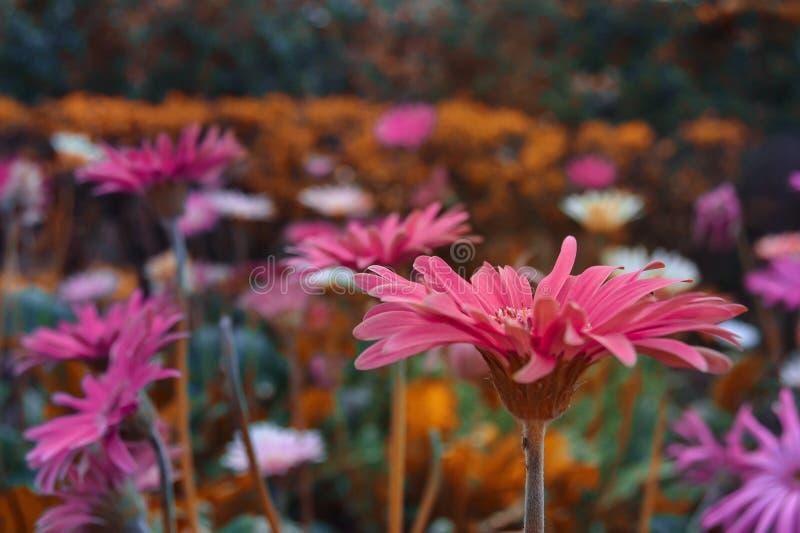Arte floral fotos de archivo
