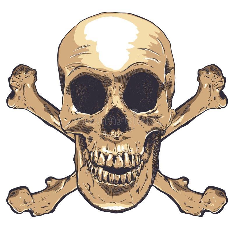 Arte humana do vetor do crânio Ilustração desenhada mão ilustração royalty free