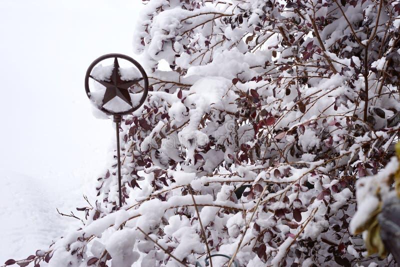 Arte solitária do jardim da estrela - horiz da neve imagem de stock royalty free
