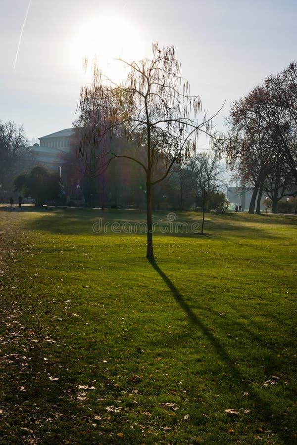 Arte solo de la naturaleza del árbol del parque de la hierba verde de la mañana fría muerta del invierno imagen de archivo