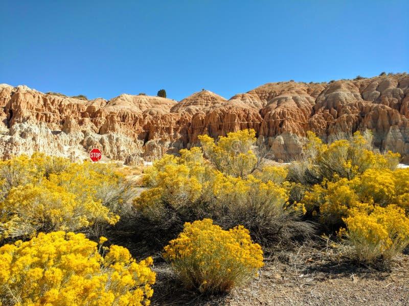 Artemisia gialla in fioritura al parco di stato della gola della cattedrale fuori di Panaca e di Pioche, Nevada immagine stock libera da diritti