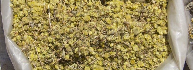 Artemisiaabsinthium royaltyfria foton